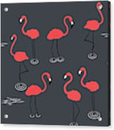 A Flamboyance Of Flamingos  Acrylic Print