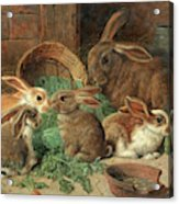 A Mother Rabbit And Her Young Acrylic Print