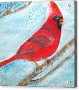 A Red Bird  Acrylic Print