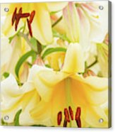 A Tower Of Lilies Acrylic Print