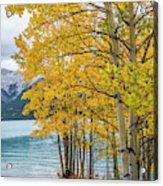 Abraham Lake Acrylic Print