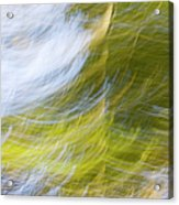 Abstract Close Up Of Trees Acrylic Print