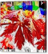 Abstract Fall Acer Stained Glass  Acrylic Print