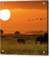 African Elephants Walking At Golden Sunrise Acrylic Print