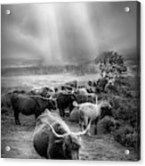After The Rain On The Mountain In Black And White Acrylic Print