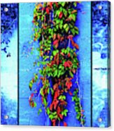 Alley-wall Paradise Acrylic Print
