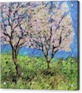 Almonds In Full Bloom Acrylic Print