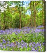 An English Bluebell Wood Acrylic Print