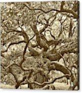 Angel Oak Drama In Vintage Sepia Acrylic Print