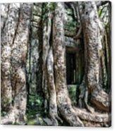 Angkor Roots Acrylic Print