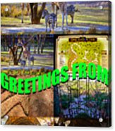Animal Kingdom Custom Greeting Card Acrylic Print