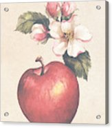 Apple And Blossoms Acrylic Print