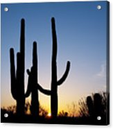 Arizona Cacti, 2008 Acrylic Print