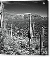 Arizona, Tucson, Saguaro Np, Brown Acrylic Print
