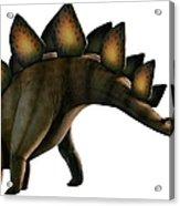 Artwork Of A Stegosaurus Dinosaur Acrylic Print