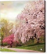 Asian Cherry Grove Acrylic Print