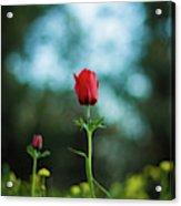 Aspecial Flower  Acrylic Print