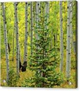 Aspen Christmas Tree Acrylic Print