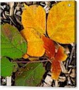 Assiniboine Forest Floor No.1 Acrylic Print