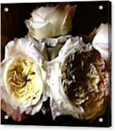 Austin Roses Notan Acrylic Print