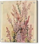 Australian Wild Flowers  8 Acrylic Print