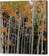 Autumn As The Seasons Change Acrylic Print