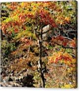 Autumn Color In Smoky Mountains National Park Acrylic Print