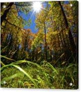 Autumn Forest Delight Acrylic Print