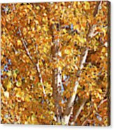 Autumn Golden Leaves Acrylic Print