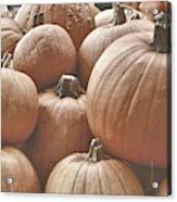 Autumn Harvest Acrylic Print