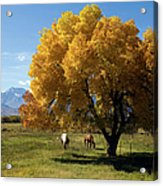 Autumn Horses Acrylic Print