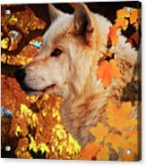 Autumn Leaves And Wolf Acrylic Print