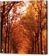 Autumn Lights At Groeneveld Acrylic Print