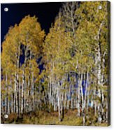 Autumn Walk In The Woods Acrylic Print