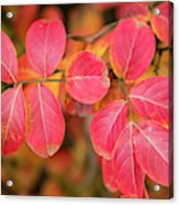 Autumnal Hues Acrylic Print