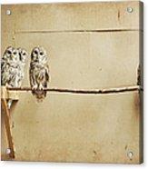 Baby Barred Owls Acrylic Print