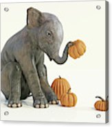 Baby Elephant And Pumpkins Acrylic Print