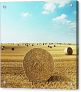 Bales Of Hay In Harvested Field Acrylic Print