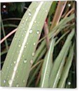 Bamboo And Water Acrylic Print