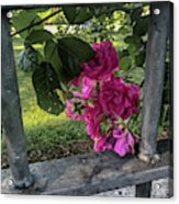 Bars Of Rose Acrylic Print