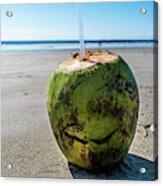 Beach Coconut Acrylic Print