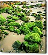 Beach Rocks Covered With Seaweed Acrylic Print
