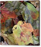 Beauti Fall Acrylic Print