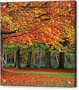 Beautiful Autumn In Park Acrylic Print