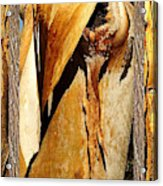 Beautiful Bark  Acrylic Print