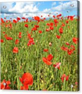 Beautiful Fields Of Red Poppies Acrylic Print