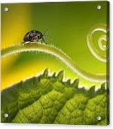 Beautiful Insects On A Leaf Close-up Acrylic Print