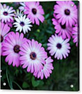 Beautiful Pink Flowers In Grass Acrylic Print