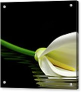Beautiful White Calla Lily Reflected In Water Acrylic Print