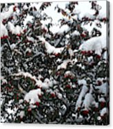 Berries And Snow Acrylic Print